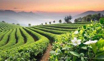 top tea producing countries